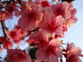 flower:DSC01603.JPG