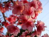 flower:DSC01604.JPG