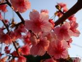 flower:DSC01606.JPG