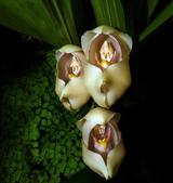 flower:1042287958_m.jpg