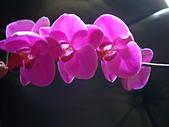 flower:DSC01256.JPG
