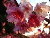 flower:DSC01608.JPG