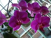 flower:DSC01257.JPG