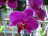 flower:DSC01258.JPG
