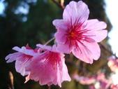 flower:DSC01609.JPG