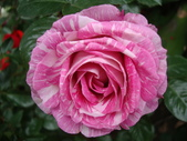 flower:DSC02838.JPG