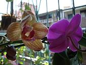 flower:DSC01259.JPG