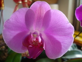 flower:DSC01690.JPG