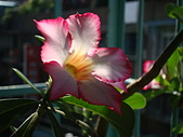 flower:DSC01260.JPG