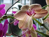 flower:DSC01262.JPG