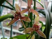 flower:DSC01310.JPG
