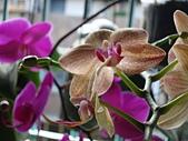 flower:DSC01263.JPG