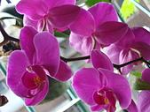 flower:DSC01265.JPG