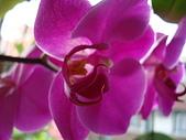 flower:DSC01268.JPG