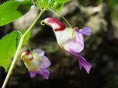 flower:1042284470_m.jpg