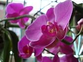 flower:DSC01270.JPG