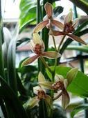flower:DSC01311.JPG