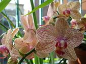 flower:DSC01272.JPG
