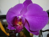 flower:DSC01702.JPG