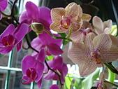 flower:DSC01273.JPG