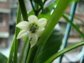 flower:DSC01781.JPG