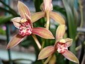 flower:DSC01318.JPG