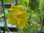 flower:DSC01334.JPG
