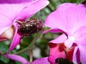 flower:DSC01803.JPG
