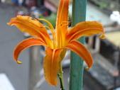 flower:DSC01350.JPG