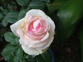 flower:DSC02837.JPG