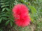 flower:DSC02709.JPG