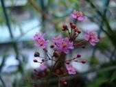flower:DSC01367.JPG