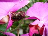 flower:DSC01804.JPG