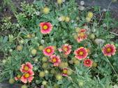 flower:DSC02496.JPG