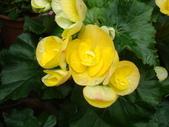 flower:DSC02826.JPG