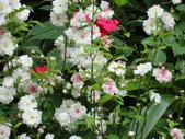 flower:DSC02833.JPG