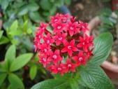flower:DSC02830.JPG