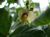 flower:DSC01412.JPG