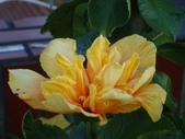 flower:DSC01533.JPG