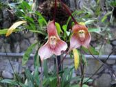 flower:1042286870_m.jpg