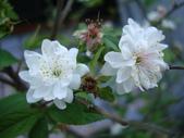 flower:DSC01559.JPG