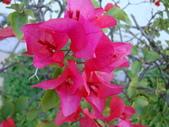 flower:DSC01565.JPG