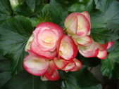 flower:DSC02841.JPG