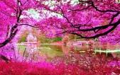 風景:10013933_529781763799271_4845372137559410973_n.jpg