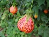 flower:DSC02846.JPG