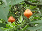 flower:DSC02821.JPG