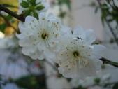 flower:DSC01578.JPG