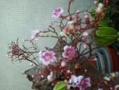 flower:1405570256875.jpg