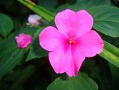 flower:DSC01590.JPG
