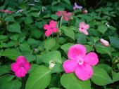 flower:DSC01591.JPG